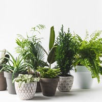 Home Plant Subscriptions By Flourish